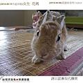 PhotoCap_02花媽.jpg