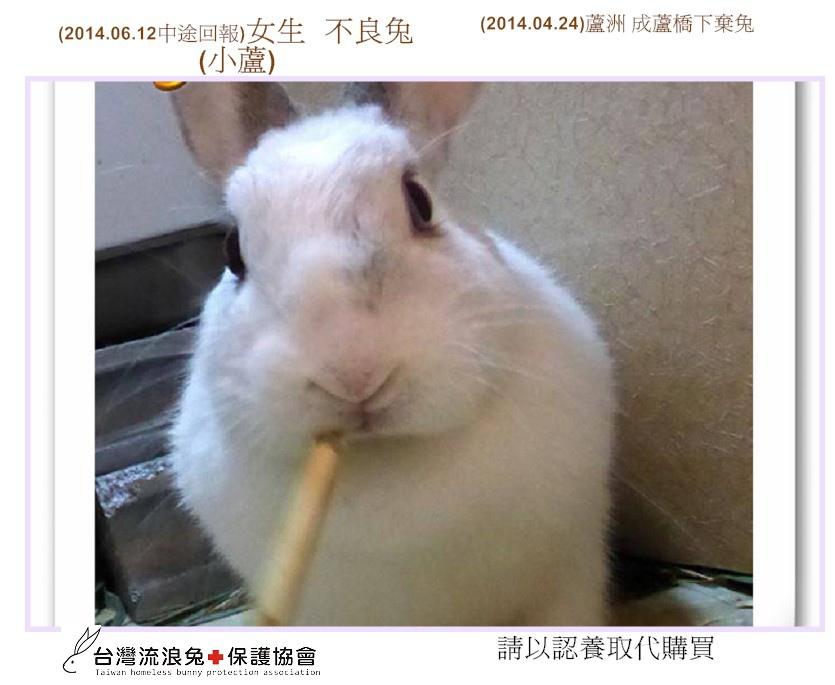 PhotoCap_01小蘆...jpg