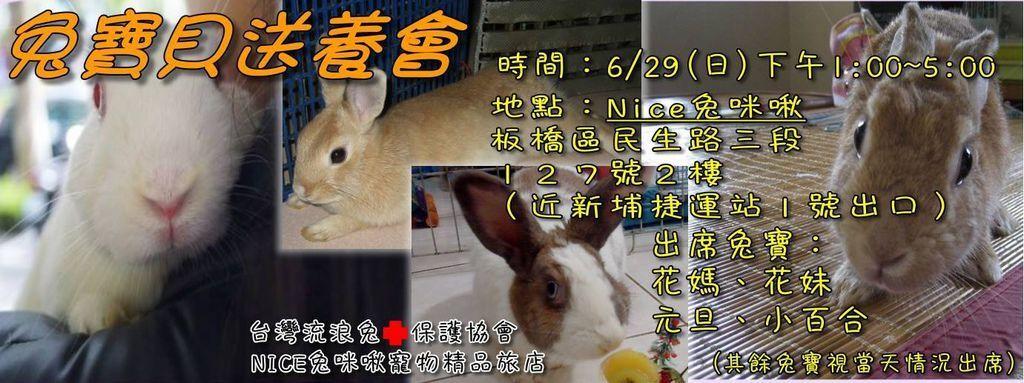2014年 6月份 中途兔送養會