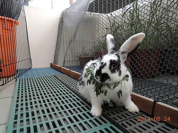 兔兔絕對無法抗拒的新鮮草草圈...