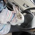 跟媽媽一起開車~go~.jpg