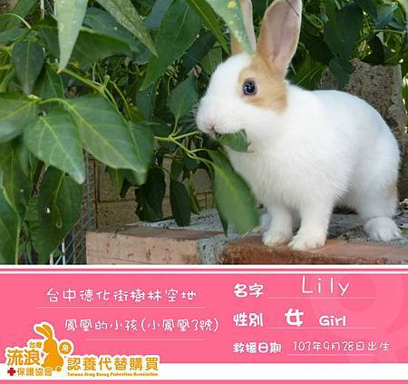 3號Lily-送.jpg