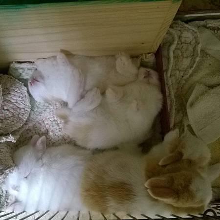晚安,小寶貝們,乖乖睡覺,一䏃大一寸喔!.jpg