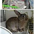 三小幼兔料吃完第一包。。.jpg