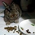 奇怪喜歡便在碗盤。吃地上的料。。.jpg