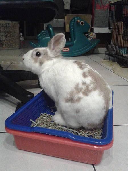 大雄:吃草草就是要在盒子裡吃才霸氣!!.jpg
