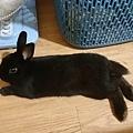 放風中,第一次看到他放鬆躺躺跟跳兔子舞.jpg