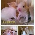 小竹的一雙寶貝,白白胖胖,走路搖搖晃晃,開始探索這個世界。.jpg