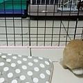 有兔想去找朋友.jpg