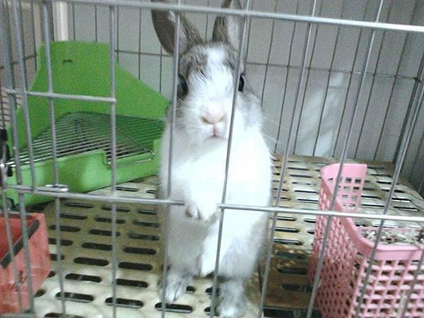 桃園棄兔救援紀錄-小花.jpg