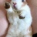 幸運草表示:我可愛嗎😣?.jpg