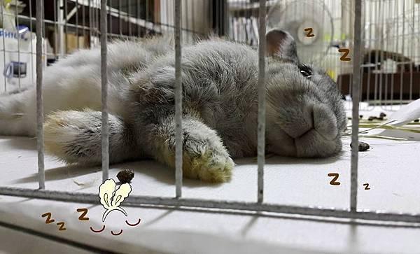 [中途報報] 模範生睡.jpg