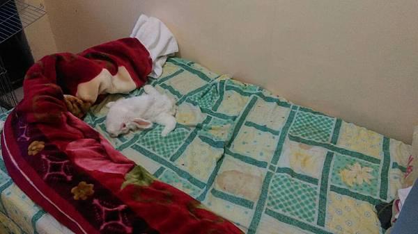 小青娃在床上放風.jpg