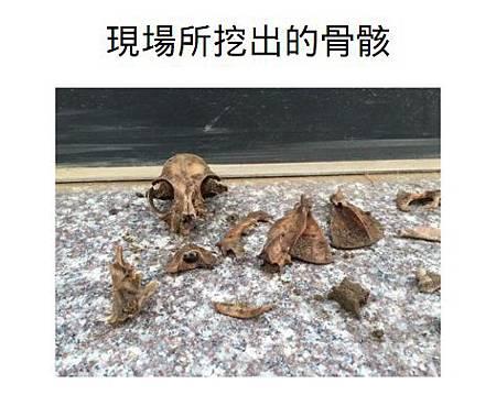 現場所挖出的骨骸3.jpg