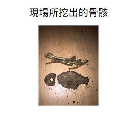 現場所挖出的骨骸4.jpg