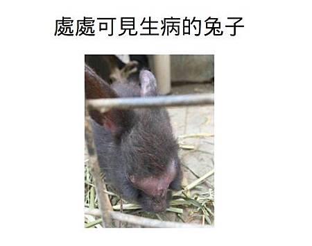 處處可見生病的兔子2.jpg