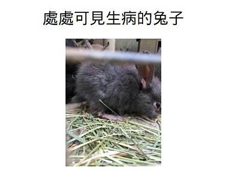 處處可見生病的兔子1.jpg