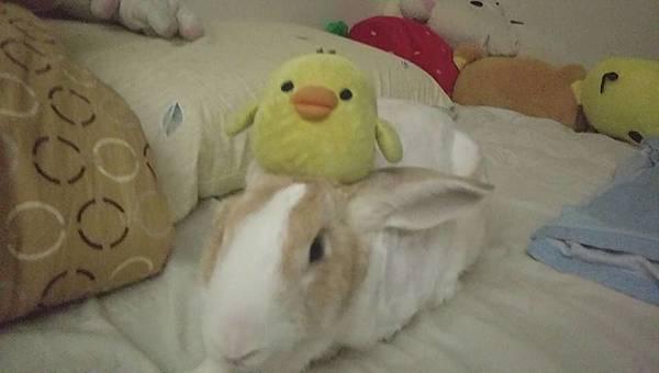 rabbit1107