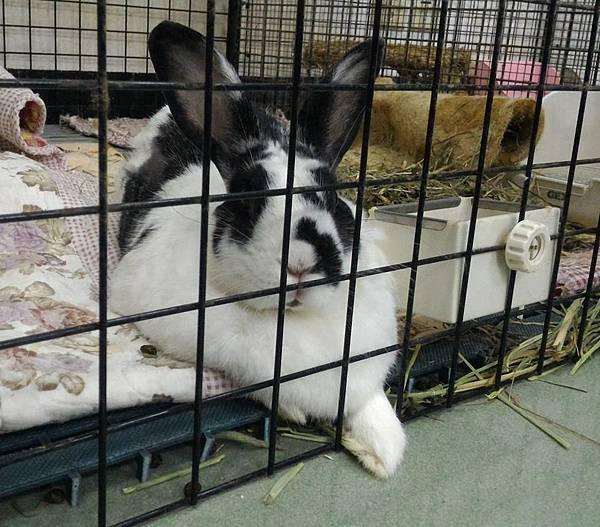 rabbit1185