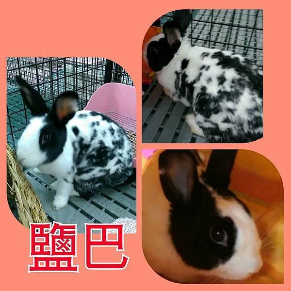 rabbit1273