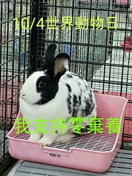 rabbit1146