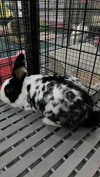 rabbit1007