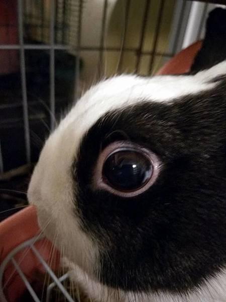 rabbit1346