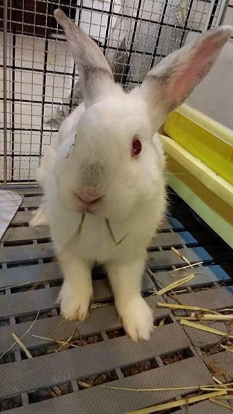 rabbit1351