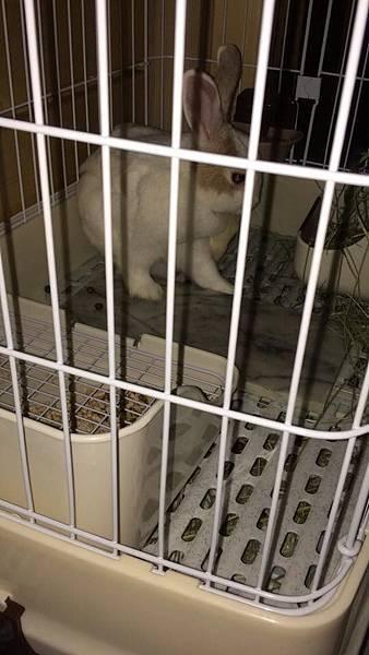 rabbit1360