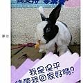 rabbit1140