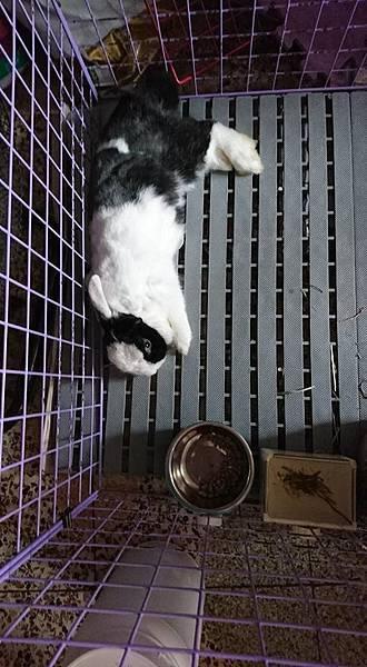 rabbit1029