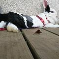 rabbit1125