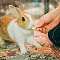 rabbit1002