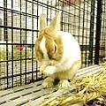 rabbit1013