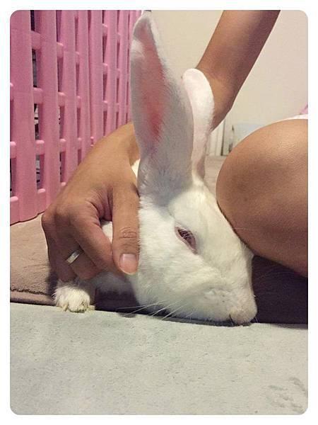 rabbit1170