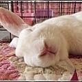 rabbit1255