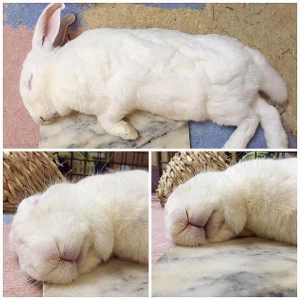 rabbit1138