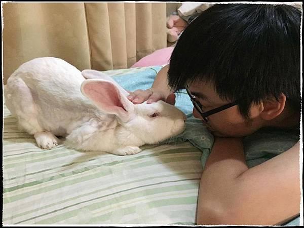 rabbit1131