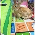 rabbit1326