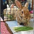 rabbit1233