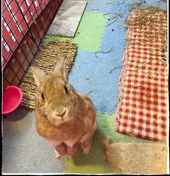 rabbit1187