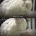 rabbit1037