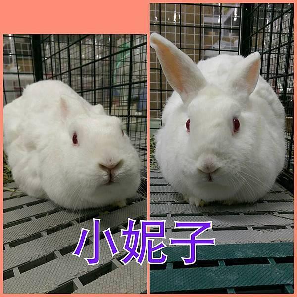 rabbit1268