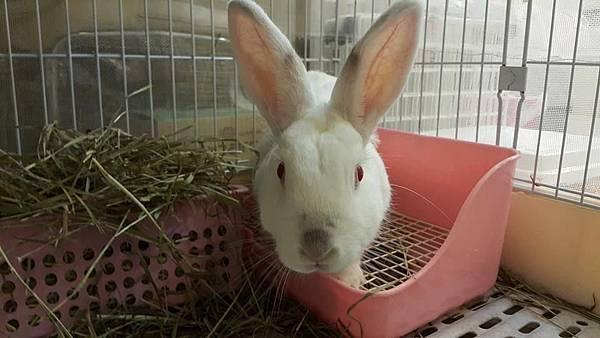 rabbit1103