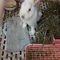 rabbit1023