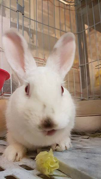 rabbit1318