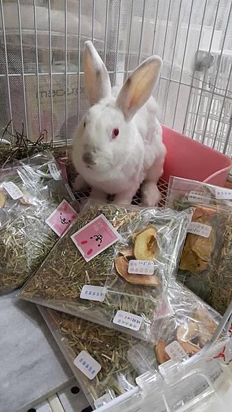 rabbit1091