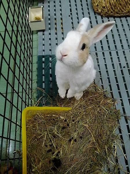 rabbit1031