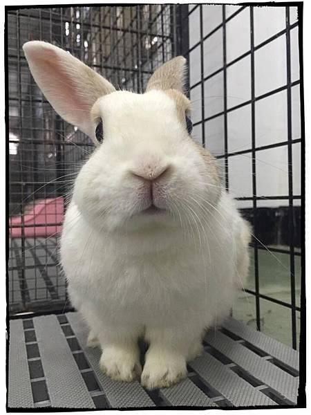 rabbit1027