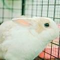 rabbit1010